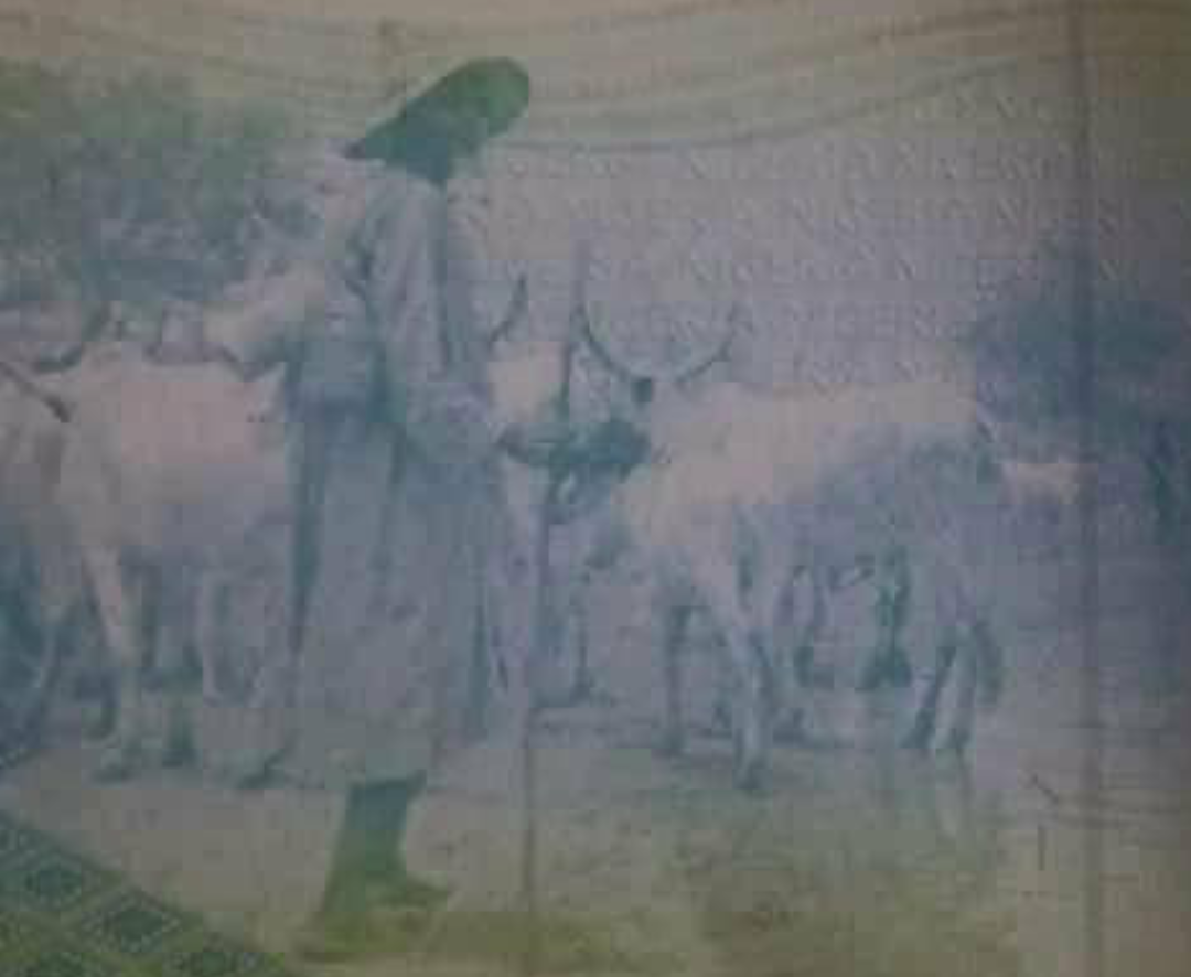 Fulani Herdsmen and cows on a page of the Nigerian Passport